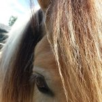 Funride Equidream sfeer closeup