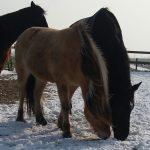 Funride Equidream sfeer winter