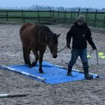 Funride Equidream schrik en obstakel training